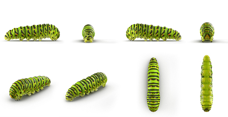 Swallowtail caterpillar or Papilio Machaon renders set from different angles on a white. 3D illustration Zdjęcie Seryjne
