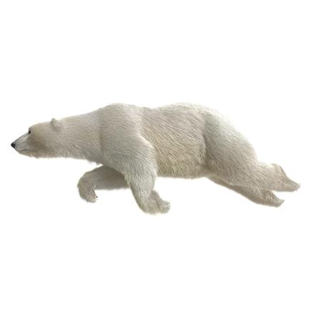 Large male Polar bear swimming on a white. 3D illustration Stock Photo