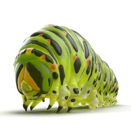 애벌레 Papilio xuthus. 흰색으로 격리. 3D 일러스트 레이션
