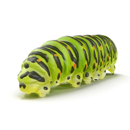 Machaon caterpillar on a white. 3D illustration