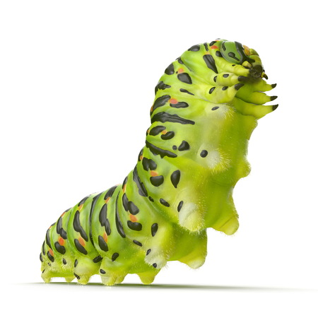 スワローテイルキャタピラまたはパピリオマチャオン白。3Dイラストレーション 写真素材