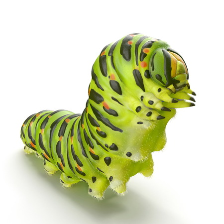 Swallowtail caterpillar or Papilio Machaon on a white. 3D illustration