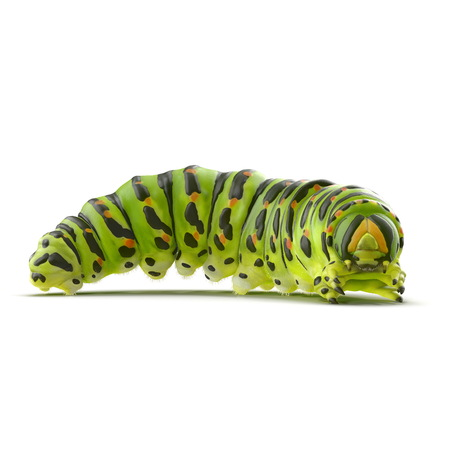 Underside of green caterpillar with prolegs and claspers on a white. 3D illustration