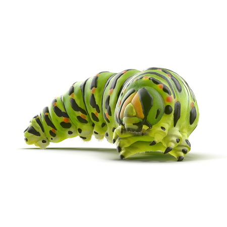 白にプロレッグとラッパーを持つ緑の毛虫の下側。3Dイラストレーション