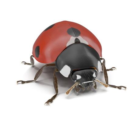 Ladybug bug on white. 3D illustration Stock Photo