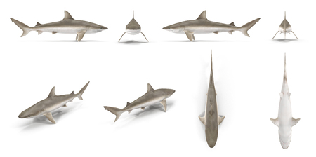Blacknose Shark renders set from different angles on a white. 3D illustration Stock Photo