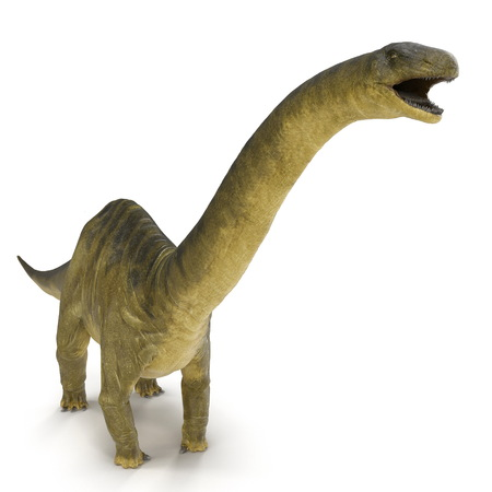 Apatosaurus Dinosaur on white. 3D illustration Stock Illustration - 103682043