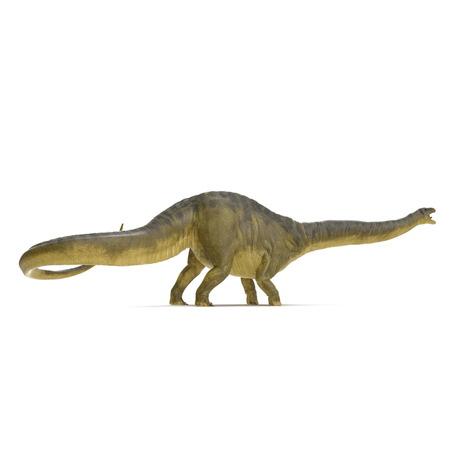 Apatosaurus Dinosaur on white. 3D illustration Stock Illustration - 103682044
