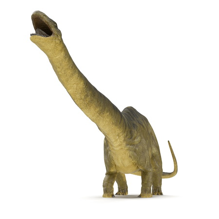Apatosaurus Dinosaur on white. Front view. 3D illustration