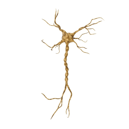 Single neuron nervous system on white. 3D illustration
