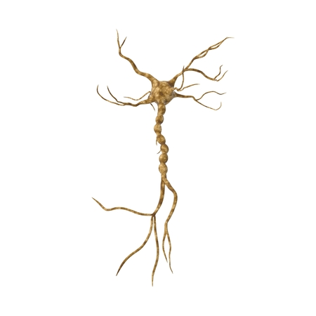 Single neuron nervous system on white. 3D illustration