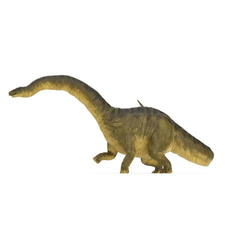 Apatosaurus Dinosaur on white. 3D illustration Stock Illustration - 105488075