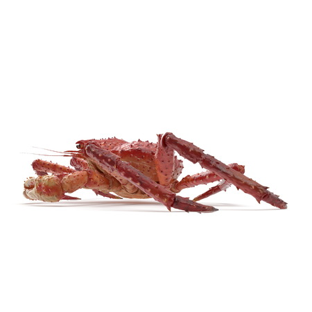 Red King Crab Kamchatka On White Background. 3D Illustration, isolated 免版税图像