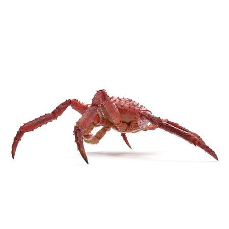 Red King Crab Kamchatka On White Background. 3D Illustration, isolated Reklamní fotografie