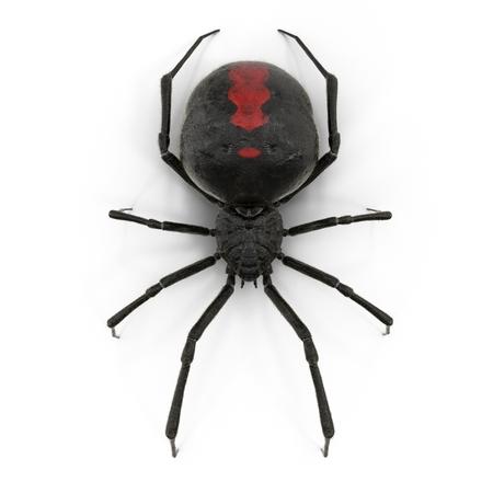 Black Widow Spider 3D Illustration On White Background Foto de archivo
