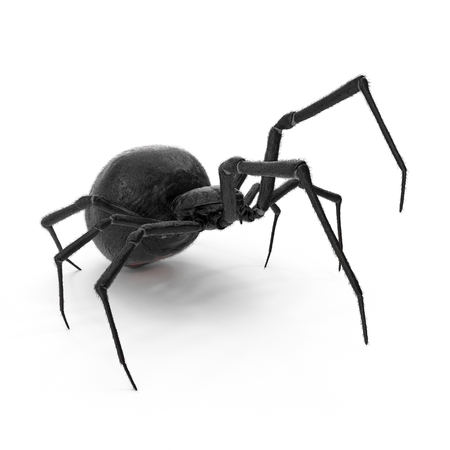 Black Widow Spider 3D Illustration On White Background Isolated Foto de archivo