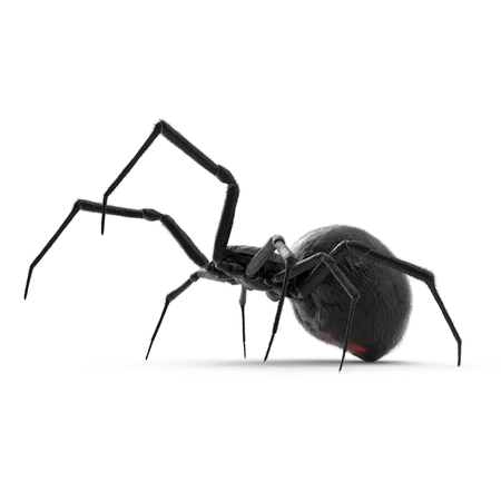 Black Widow Spider 3D Illustration On White Background Isolated Stock Photo