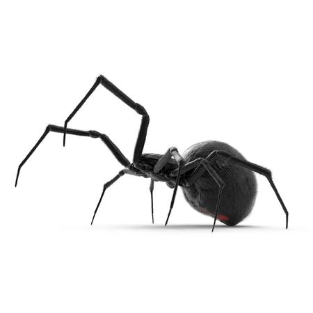 Zwarte weduwe spin 3D illustratie op witte achtergrond geïsoleerd