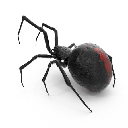 Black Widow Spider 3D Illustration On White Background Isolated Banco de Imagens