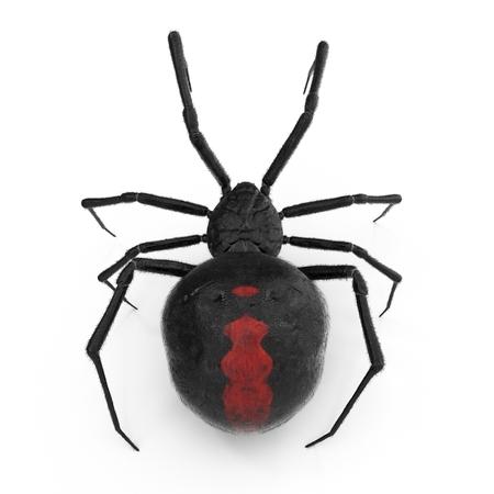Araña viuda negra Ilustración 3D sobre fondo blanco aislado
