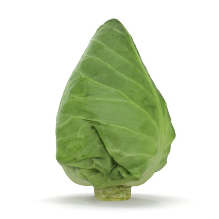 Sweetheart Cabbage 3D Illustration on White Background Stock Photo