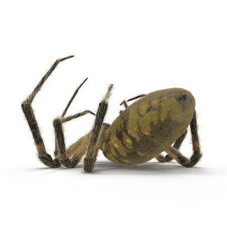 Dead Corn Spider on White Background 3D Illustration Isolated 스톡 콘텐츠
