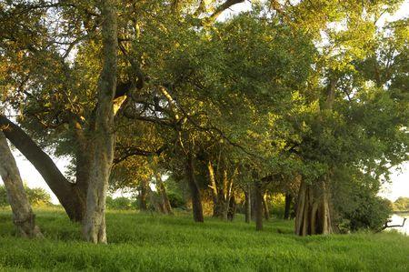 riverine: Riverine woodland along Makgalakwena River, South Africa