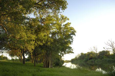 riverine: Riverine woodland along Makgalakwena River