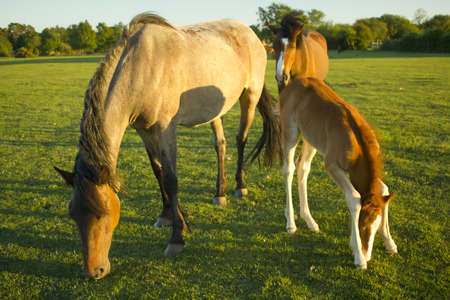 3 horses in New Forest