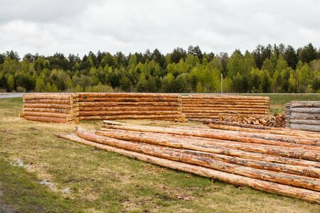 Peeled pine logs and log cabins lie in a clearing against the backdrop of a beautiful forest.