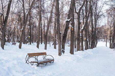 Paisaje de la ciudad de invierno. Banco de madera marrón en el callejón de un antiguo parque cubierto de nieve. Las pajareras cuelgan de los árboles. Foto de archivo