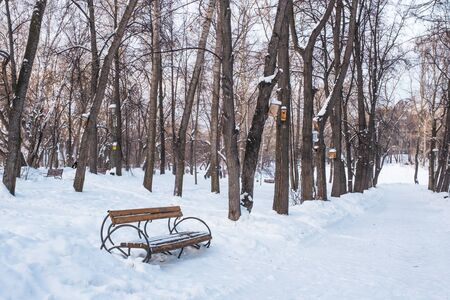Winter city landscape. Wooden brown bench in the alley of a snowy old park. Birdhouses hang on the trees. Stock fotó