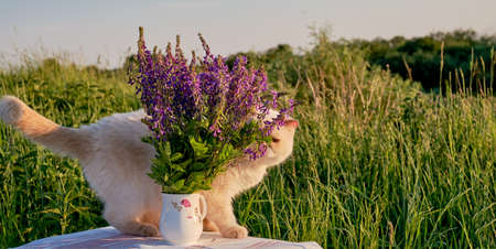 Bouquet of fresh violet wildflowers and cute domestic beige cat on a table on a blurred background of green grass. Country life concept banner