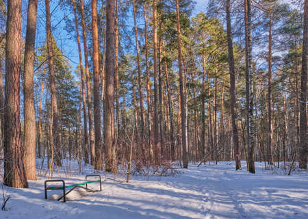 Beautiful winter forest landscape. Snowy road, footprints in the snow, bench in a pine forest on a sunny day.