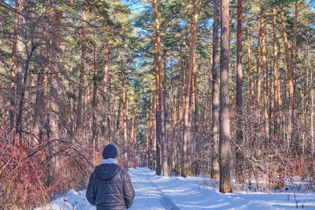 Beautiful winter forest landscape. An alone man in a black jacket and a knitted hat walks along a snowy road in a pine forest on a sunny day. 版權商用圖片