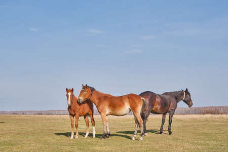 A family of horses graze peacefully in a pasture late autumn. Copy space.