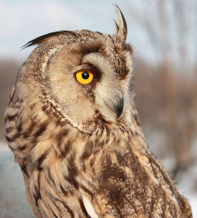 owlet: The Owlet Stock Photo