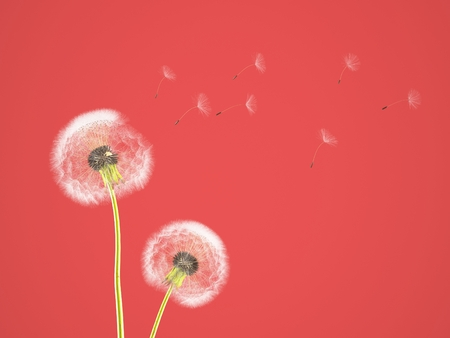fragile peace: dandelion on colorful background, with red pantone. 3d rendering Stock Photo