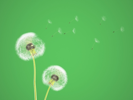 fragile peace: dandelion on colorful background, with green pantone. 3d rendering