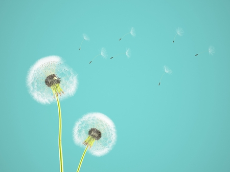 pantone: dandelion on colorful background, with limpet pantone. 3d rendering Stock Photo
