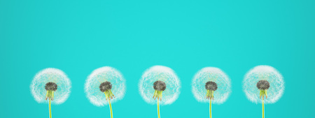 fragile peace: dandelion on colorful background, with limpet pantone. 3d rendering Stock Photo