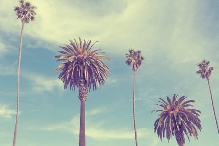 Palm trees at Santa Monica beach. Vintage post processed. Fashion, travel, summer, vacation and tropical beach concept. Stock Photo