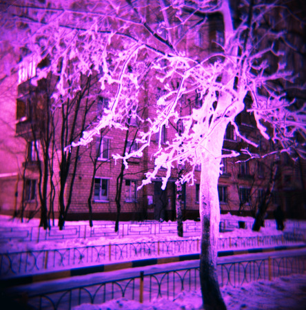lomography: Lomography shot of snow-covered tree