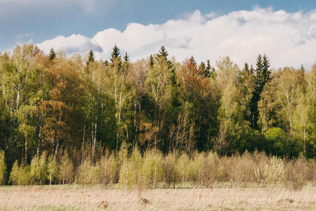 underbrush: Beautiful autumn forest and underbrush in front of it Stock Photo