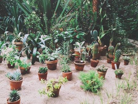 Kakteen Und Andere Sukkulenten Im Gewachshaus Des Botanischen