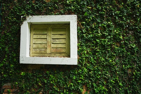 Windows on a wall covered with tree photo