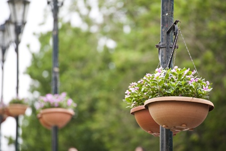 flower baskets: Hanging basket of flowers Stock Photo