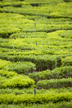 springer: sprinkle in garden