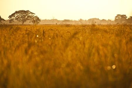 Lonely tree in the mist, nature autumn season photo
