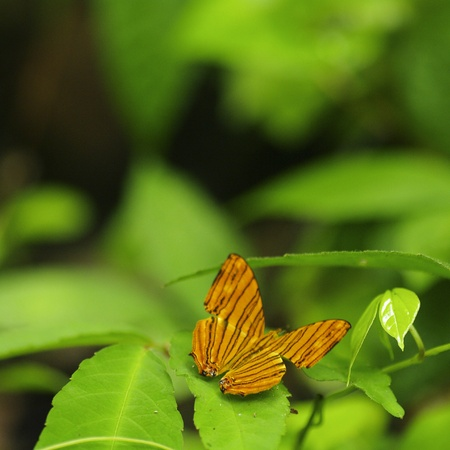 Small orange butterfly on fresh green leaf background Stock Photo - 15205799